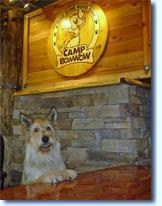 Camp Bow Wow a franchise opportunity from Franchise Genius