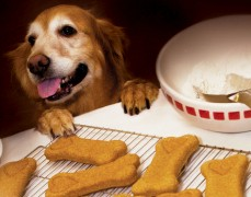 Just Dogs Gourmet a franchise opportunity from Franchise Genius