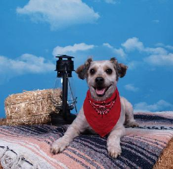 Lil Pals Pet Photography a franchise opportunity from Franchise Genius