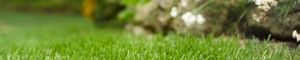 Trugreen Chemlawn a franchise opportunity from Franchise Genius